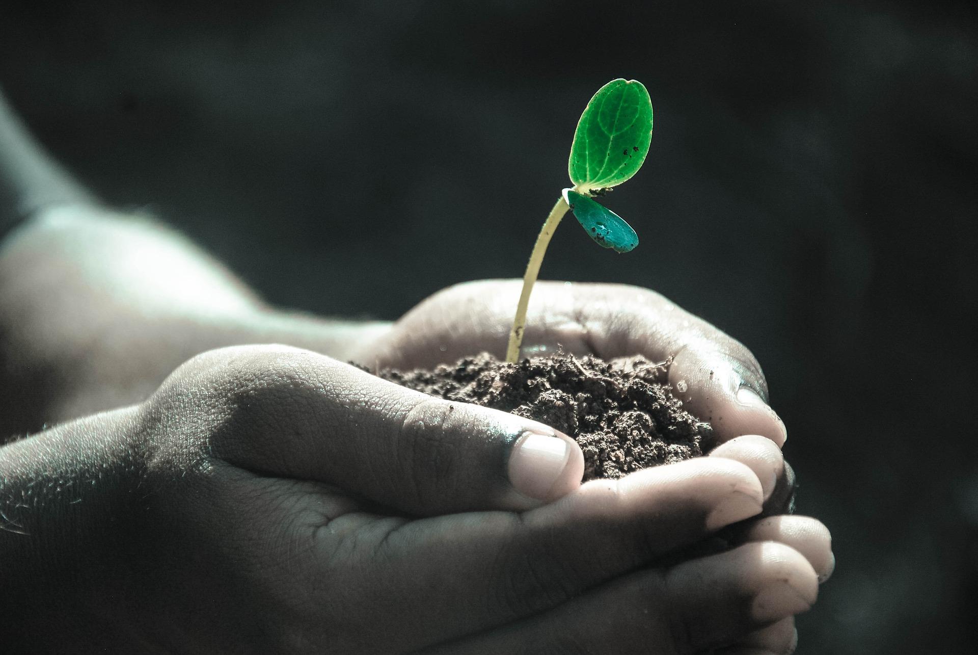 Kéz, amely földet tart, amelyből egy kis zöld növény fejlődik